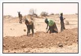 Semillas y actividades agrícolas en Níger, donde la inseguridad alimentaria es crónica.