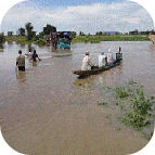 Emergencia Camerún