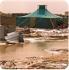 Cruz Roja envía fondos a los campamentos de refugiados saharauis afectados por las inundaciones (13-feb-06)
